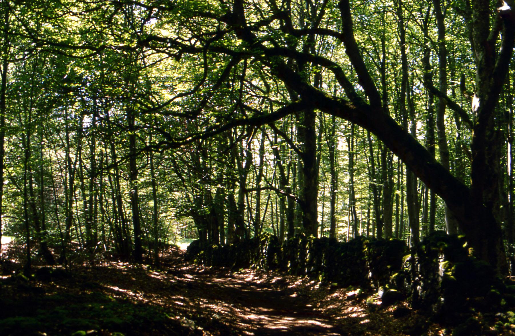 Le puy de Côme en Auvergne
