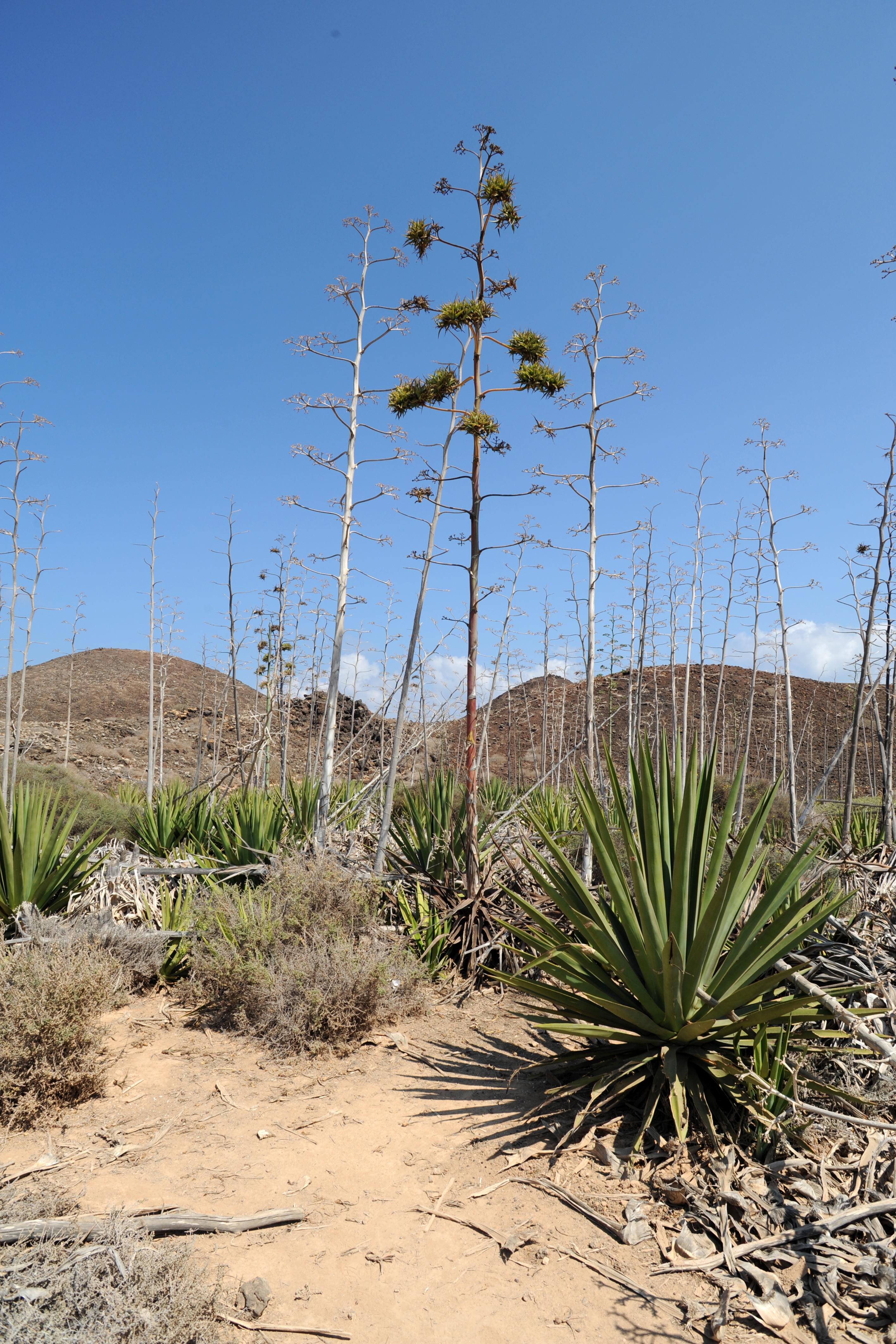 Die Flora und Fauna der Insel Fuerteventura