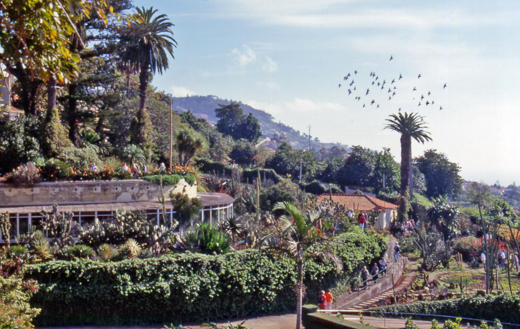 Le jardin botanique de funchal mad re for Botanique jardin