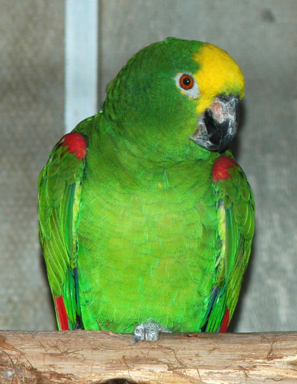le jardin des perroquets de funchal  madere