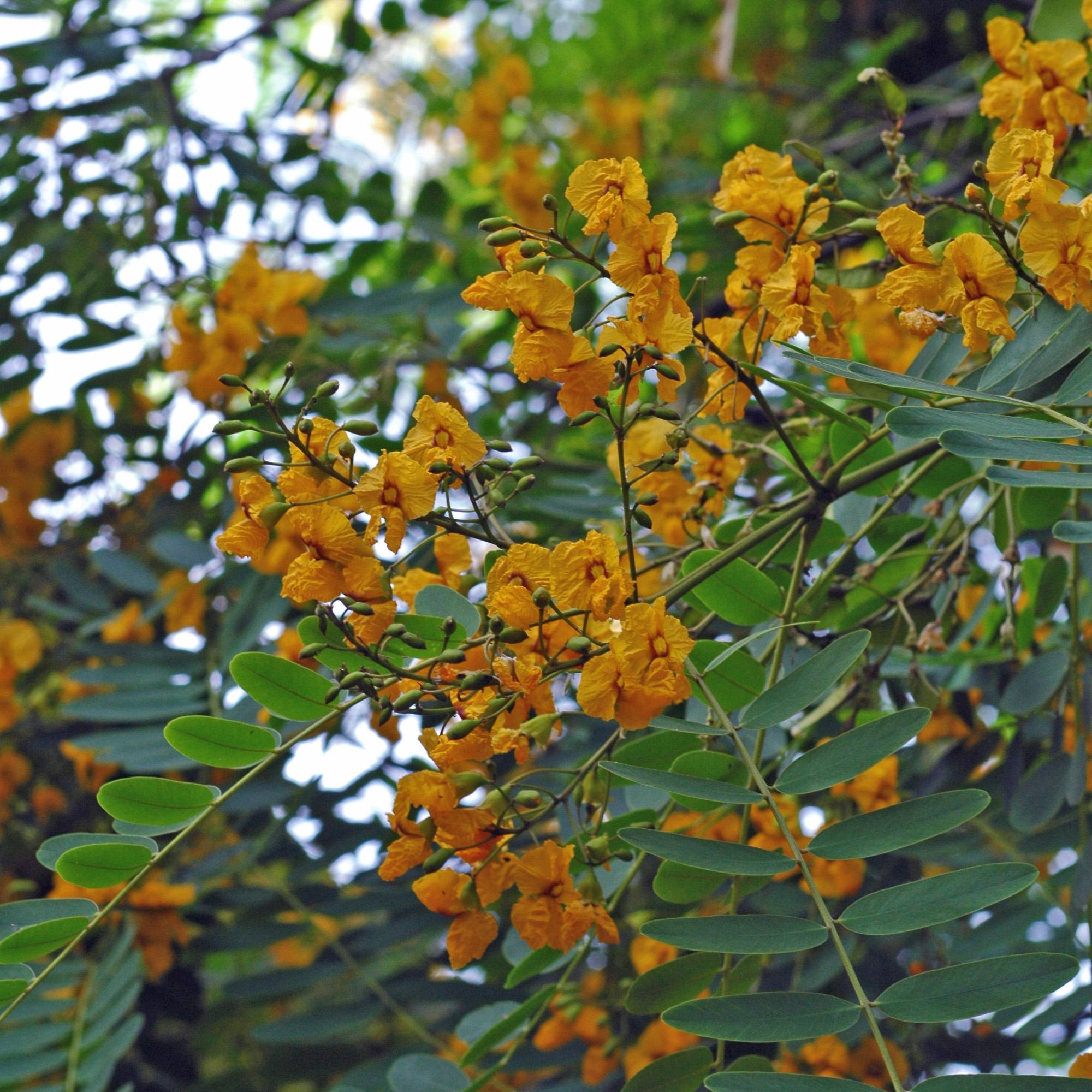 La flore et la faune de l 39 le de t n riffe for Arbres plantes fleurs