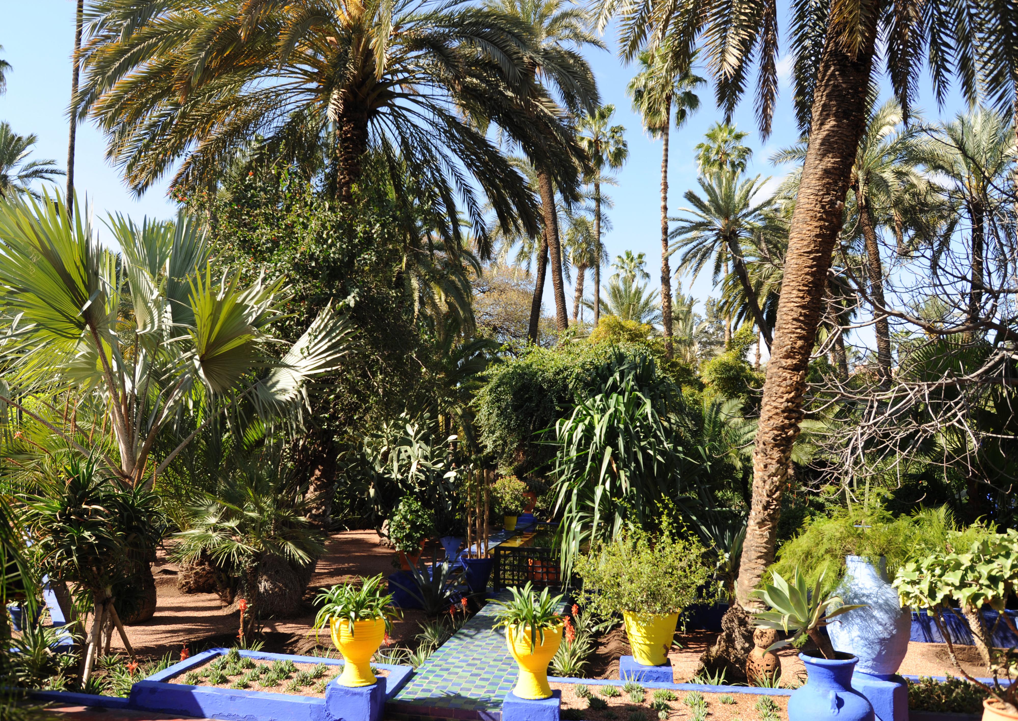 photo jardin avec palmier interesting massif minral esprit jardin sec with photo jardin avec. Black Bedroom Furniture Sets. Home Design Ideas